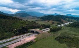 O viaduto vegetado na BR-101 (Wanderson Chan/AMLD)
