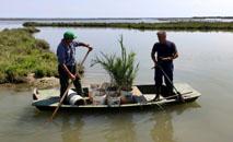 Carlo Marchesi e Adriano Croitoru replantam juncos como parte de um projeto para devolver à lagoa de Veneza sua antiga glória selvagem (Celine CORNU/AFP)