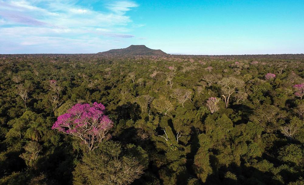 Parque Estadual do Morro do Diabo, uma das unidades geridas pela Fundação Florestal