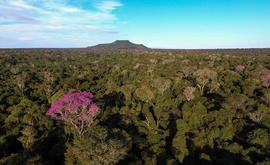 Parque Estadual do Morro do Diabo, uma das unidades geridas pela Fundação Florestal (Helder Henrique de Faria/Wikiparques.)
