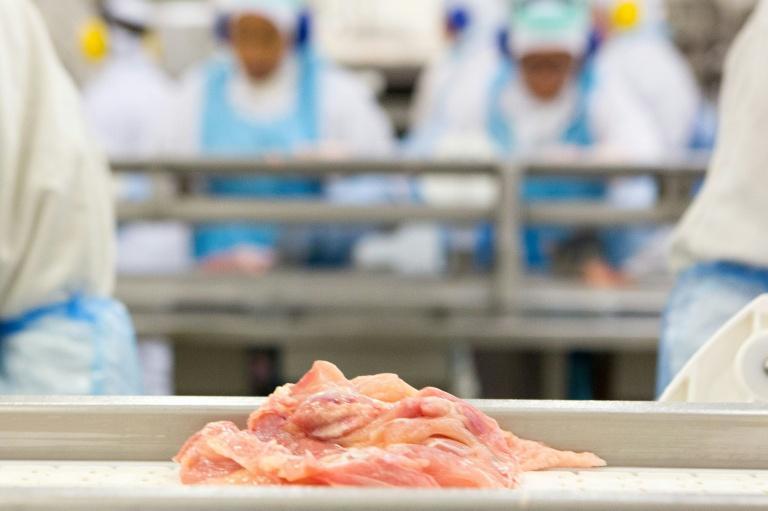 Linha de produção de frango em fábrica no Paraná, Brasil