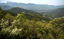 Um dos maiores experimentos de reselvagização da Europa está sendo feito na reserva natural de Grand Barry, na França (AFP)