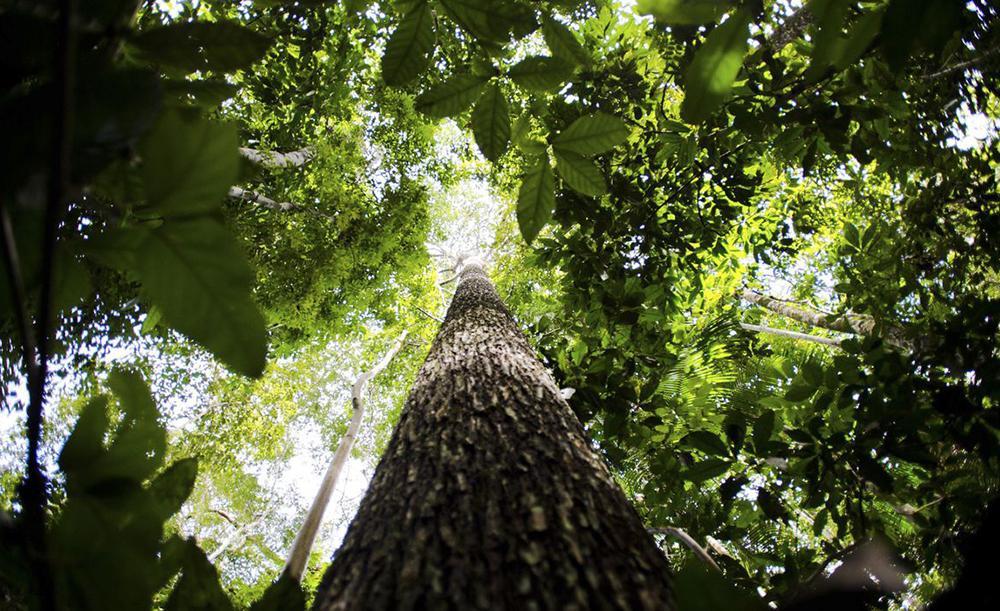 Cada árvore na Amazônia contém até 120 espécies de fungos, com diferentes características. Apesar do potencial, 'apenas 4% deles são estudados, ou seja, a grande maioria não sabemos para que serve'