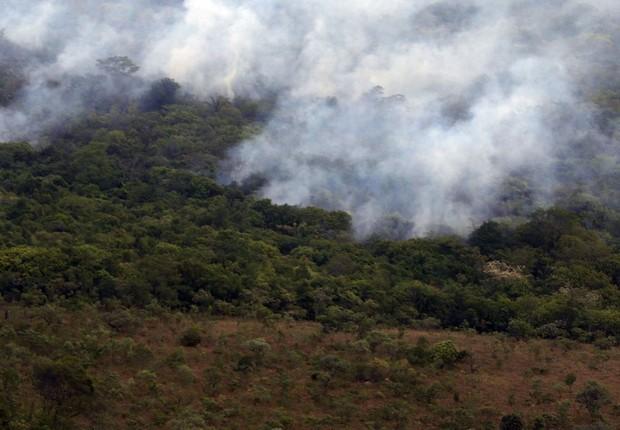 Extração ilegal da madeira continua a ser um dos principais vetores