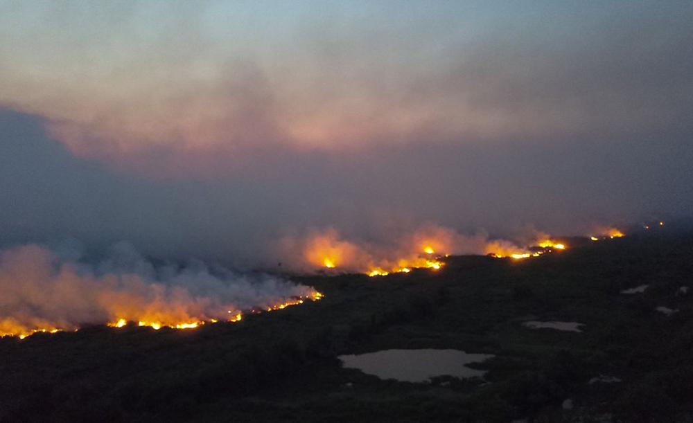 Estudo mostrou que apenas 5% da vegetação destruída no Pantanal era 'invasora', ou seja, 95% do que ardeu em chamas foi de vegetação nativa