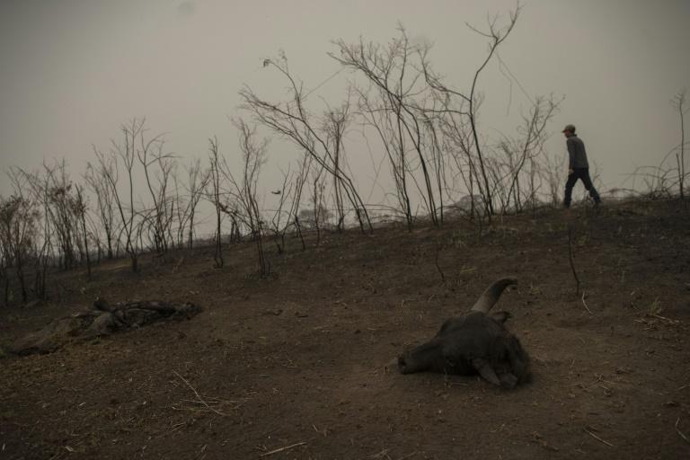 guía turístico Roberto Carvalho caminha por uma área queimada do Pantanal, no estado do Mato Grosso
