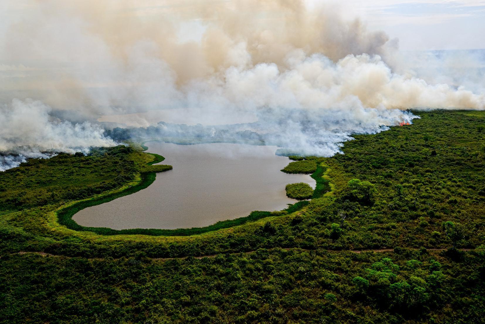 Fogo avança sobre o Pantanal e destrói tudo que encontra pelo caminho