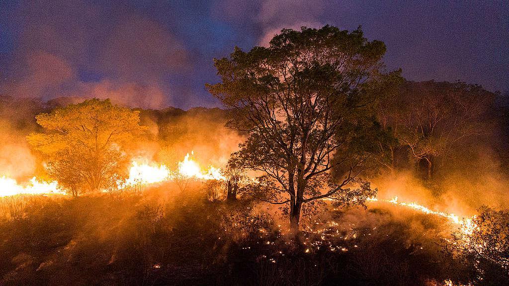 98% das queimadas no bioma são oriundas de ações humanas