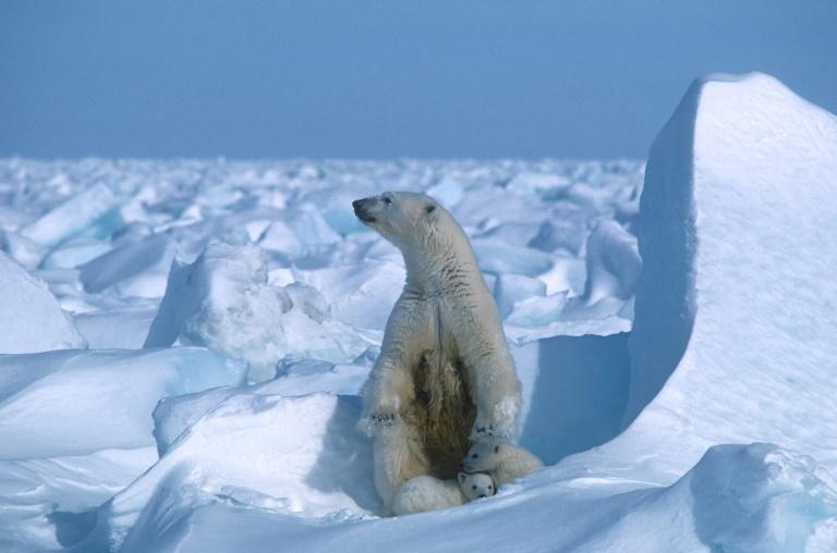 Foto da Associação Polar Bears International, em julho de 2020