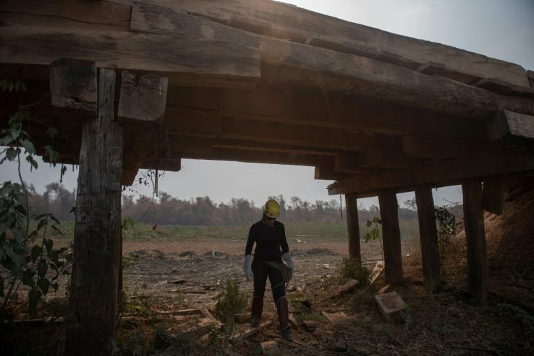 Membro de uma equipe de resgate de animais trabalha no Pantanal, no Mato Grosso