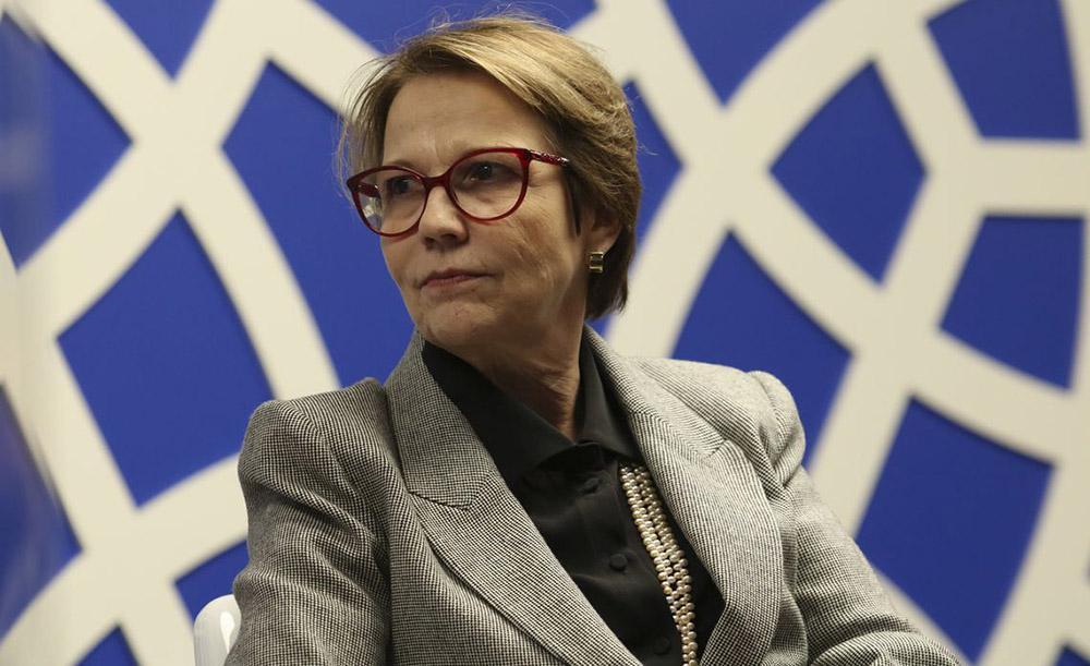 A ministra Tereza Cristina disse que é necessário punir quem ateou fogo no bioma, 'propositalmente ou inadvertidamente'
