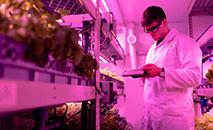 Engenheiro de design monitora plantações em fazenda indoor sustentável (Unsplash/ThisisEngineering RAEng)