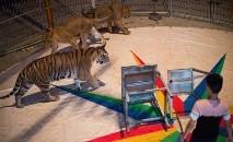 Mais de 20 países europeus já limitaram ou proibiram os espetáculos de animais (NICOLAS ASFOURI/AFP)