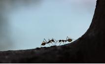 Descoberta faz parte de esforço para identificar o maior número possível de insetos e outros animais em um contexto de destruição dos ecossistemas (Maksim Shutov / Unsplash)