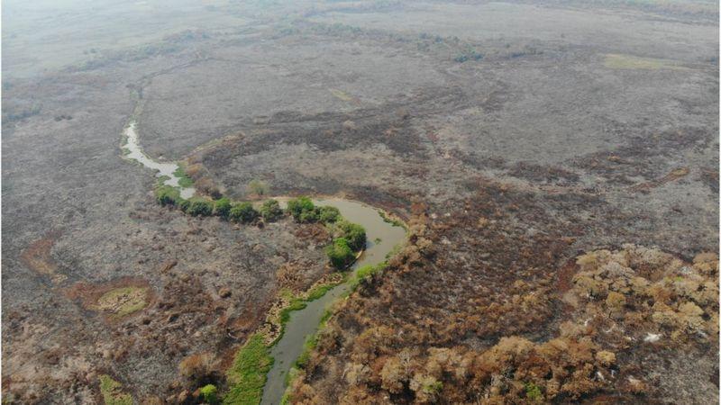 O Pantanal soma 150 mil km² localizados nos estados do Mato Grosso (35%) e Mato Grosso do Sul (65%)