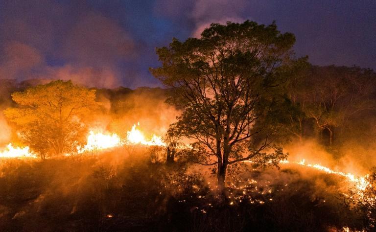 Só neste ano, fogo já destruiu quase quatro milhões de hectares do bioma