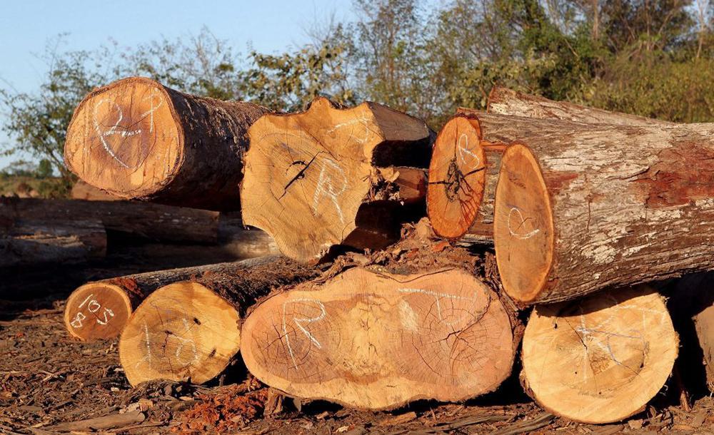 Para construir a rodovia A49 na Alemanha, foram cortadas árvores nas Florestas Herrenwald e Maubacher