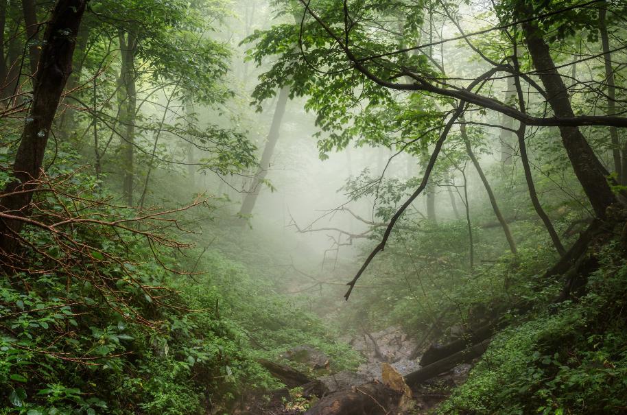 Os cristãos são convidados a pensarem no mundo como se ele fosse uma grande floresta ou uma vasta selva: escura e áspera