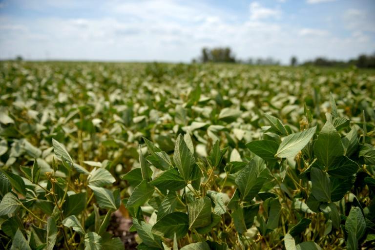 Plantação de soja na Argentina