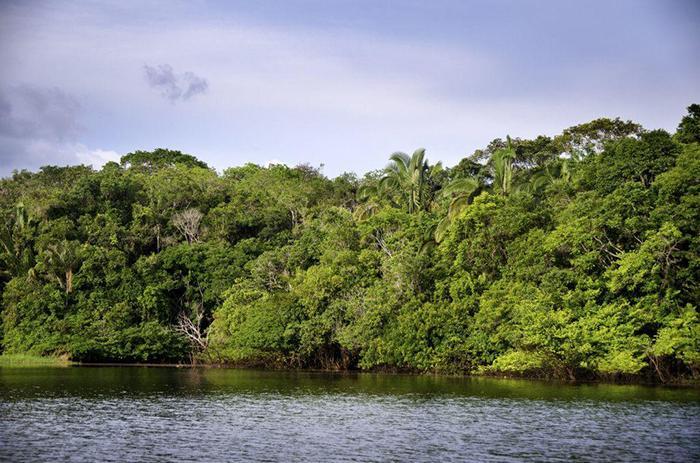 Impacto no futuro poderá ser sentido nas características dos biomas e no papel que essas árvores desempenham nos estoques de carbono