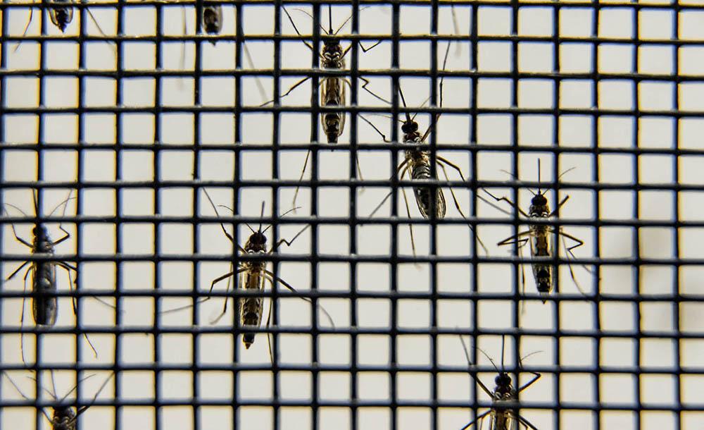 As doenças cujos vírus são transmitidos pelo mosquito são graves. A dengue hemorrágica pode trazer consequências sérias para os pacientes.
