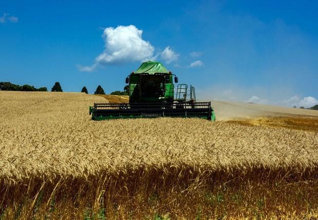 Após meia década de preços não muito atraentes dos grãos, eles agora enxergam uma nova fonte de renda