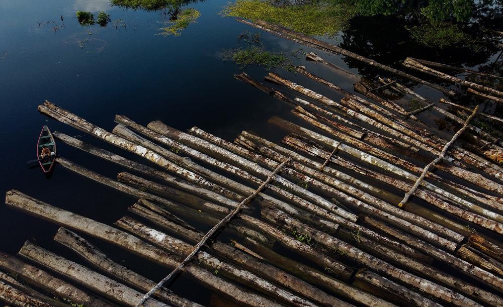 As áreas mais afetadas pelo desmatamento estão na Amazônia e no cerrado brasileiros, na Amazônia boliviana, em Paraguai, Argentina, Madagascar e nas ilhas asiáticas de Sumatra e Bornéu