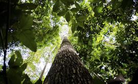 A política nacional será gerida pelo Sistema Nacional do Meio Ambiente (Sisnama), que reúne órgãos da União, dos estados e dos municípios (Arquivo/ABr)