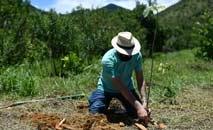 Parente de uma vítima da Covid-19 planta uma árvore como parte do projeto Bosques da Memória, na cidade de Silva Jardim, Rio de Janeiro (Mauro Pimentel/AFP)