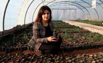 Delband Rawanduzi espera plantar 1 milhão de carvalhos em cinco anos no Curdistão iraquiano (Safin Hamed/AFP)