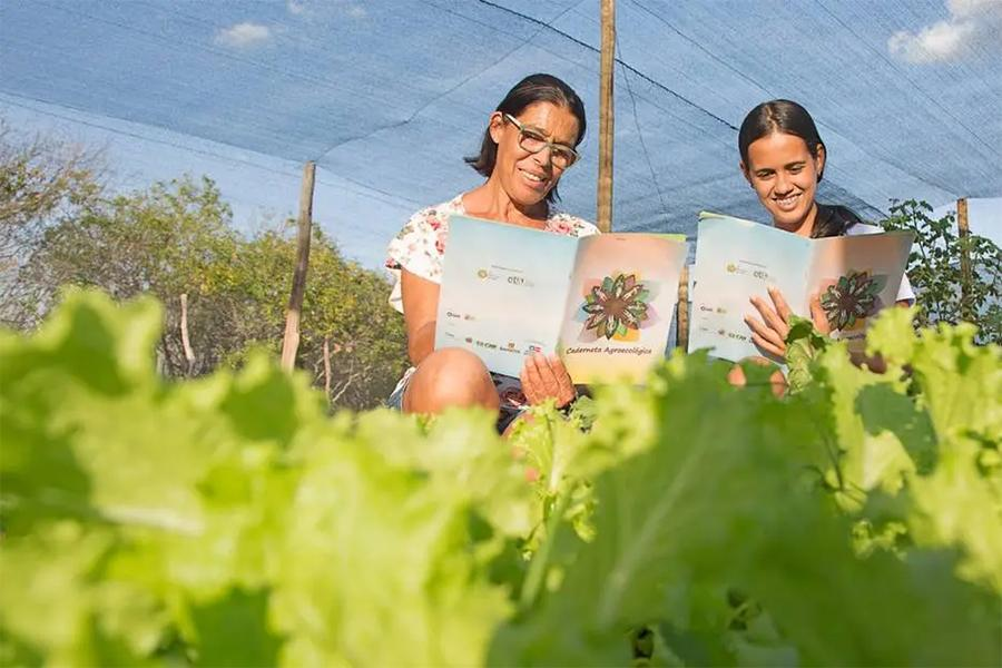 Plantação Agroecológica