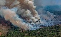 Desmatamento no país foi o maior desde 2008, segundo dados do Inpe (Victor Moriyama/Greenpeace via AFP)