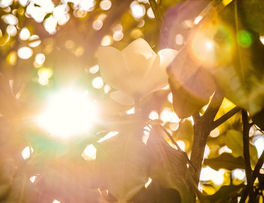 'Agir conforme a verdade nos aproxima da luz' significa ir tecendo dia-a-dia a existência conforme o que é coerente com o nosso ser essencial, no mais profundo de nós mesmos