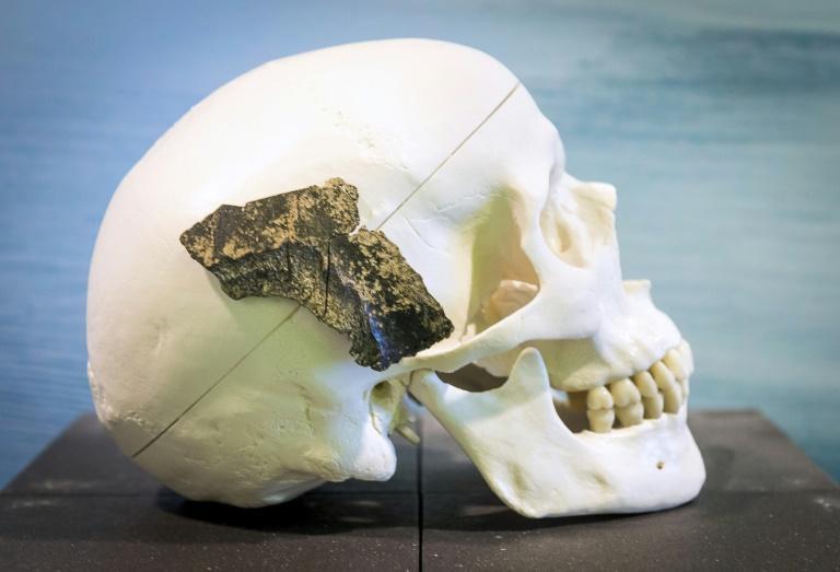 Um crânio de homo sapiens em Rotterdam, Holanda, em uma imagem de 2014