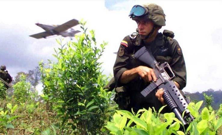 Colômbia tem a maior área semeada de narcoplantios do mundo, à frente de Peru e Bolívia