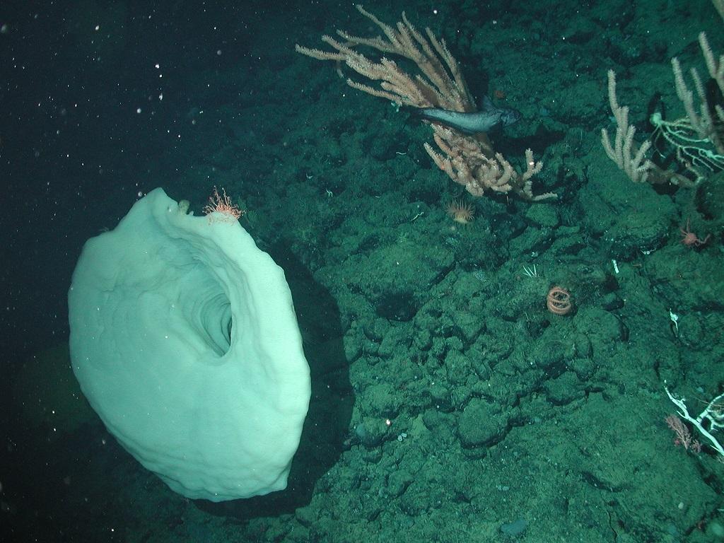 A Autoridade Internacional dos Fundos Marinhos (ISA) está elaborando regulamentos que permitiriam o início da extração de minerais do fundo do mar