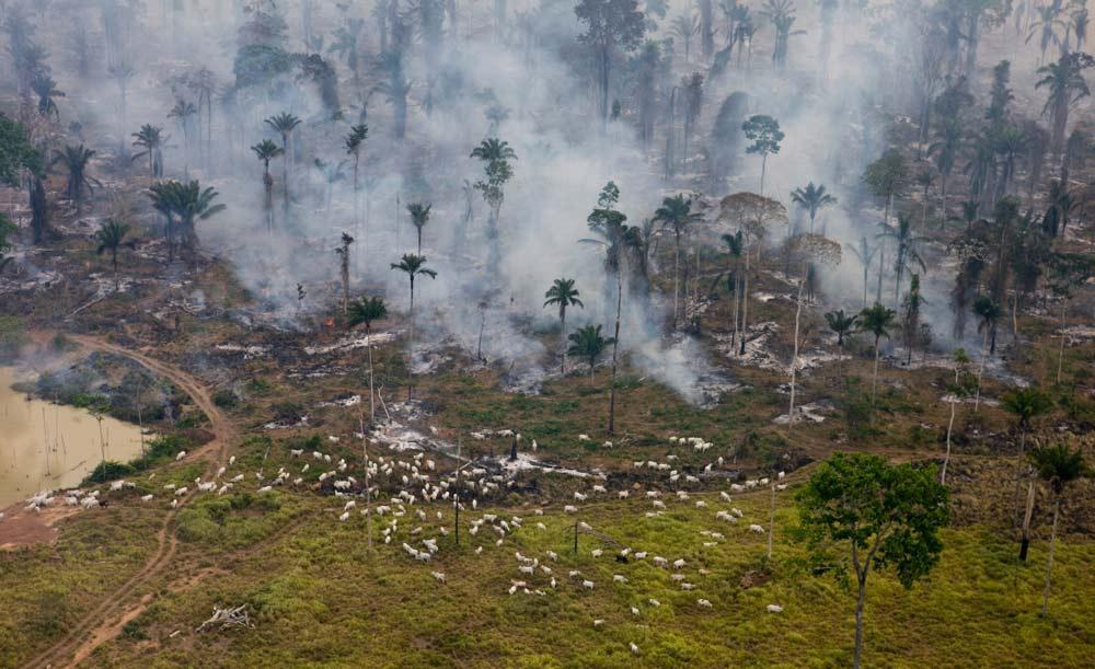 Queimadas para a criação de gado são poluentes e caras devido à especulação