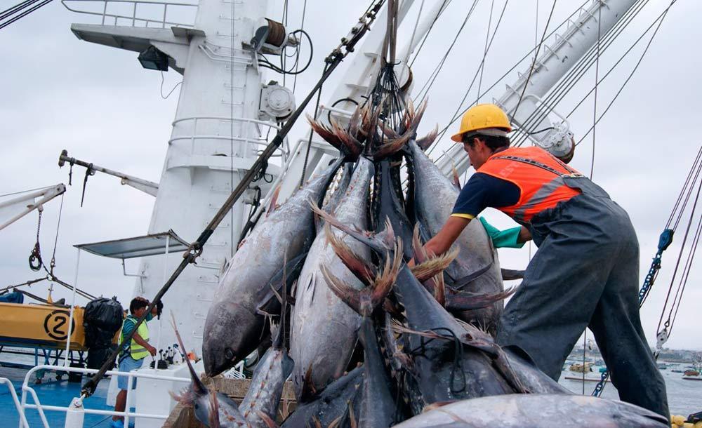 A indústria pesqueira do Equador pode ser fortemente abalada por ondas de calor nos mares
