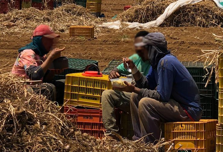 Trabalhadores foram resgatados estavam em uma fazenda de produção de alho