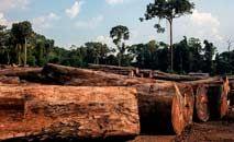 A extração de madeira é permitida, mas deve seguir procedimentos muitas vezes ignorados (Greenpeace)