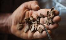Fragmentos ósseos escavados na Lapa do Santo, em Minas Gerais (Léo Ramos Chaves/Revista Pesquisa Fapesp)