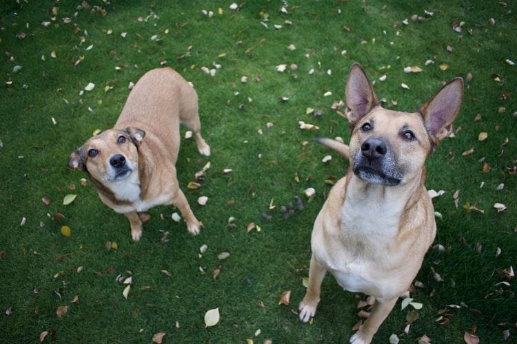 Em Minas, mulher troca marido por 69 cachorros
