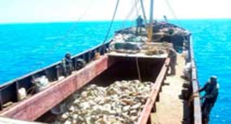 Navio pesqueiro da China, que, com o Japão, lidera a pesca ilegal no mundo (AFP)
