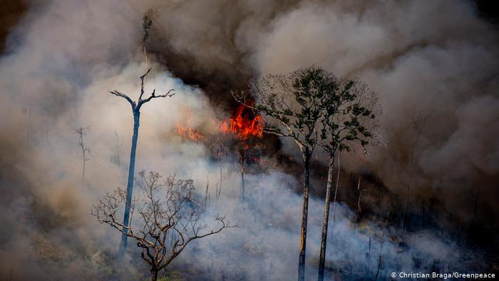 O desmatamento da Amazônia é questão prioritária para a política ambiental dos EUA