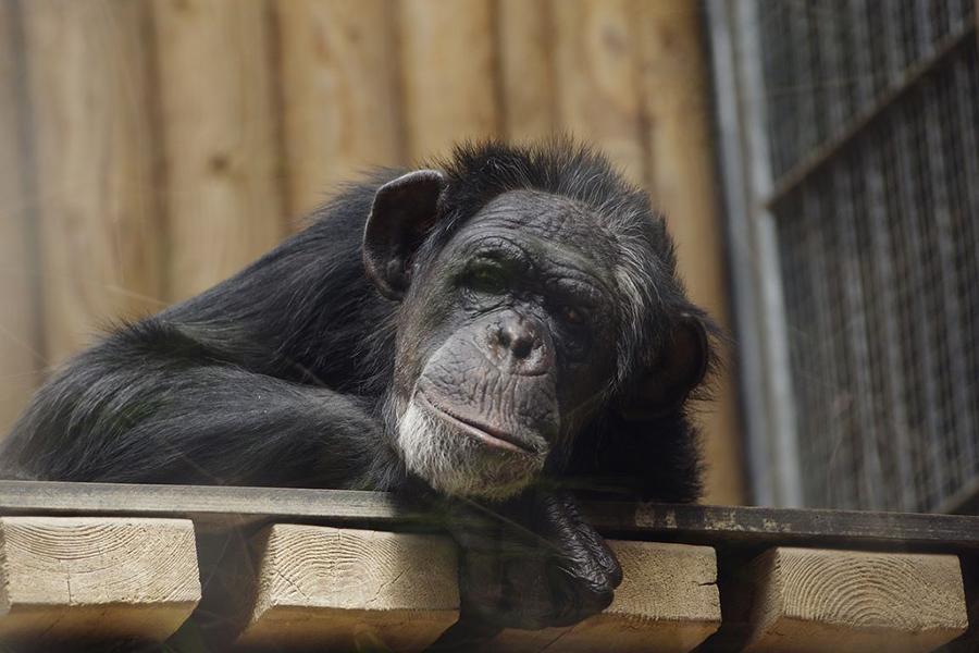 Projeto de Lei prevê que animais possam ser representados de forma individual em processos judiciais