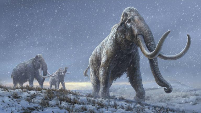 Ilustração da revista 'Nature', que representa mamutes