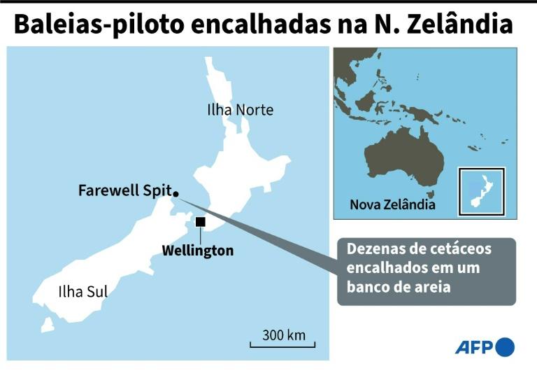 Dezenas de baleias-piloto encalhadas na N. Zelândia