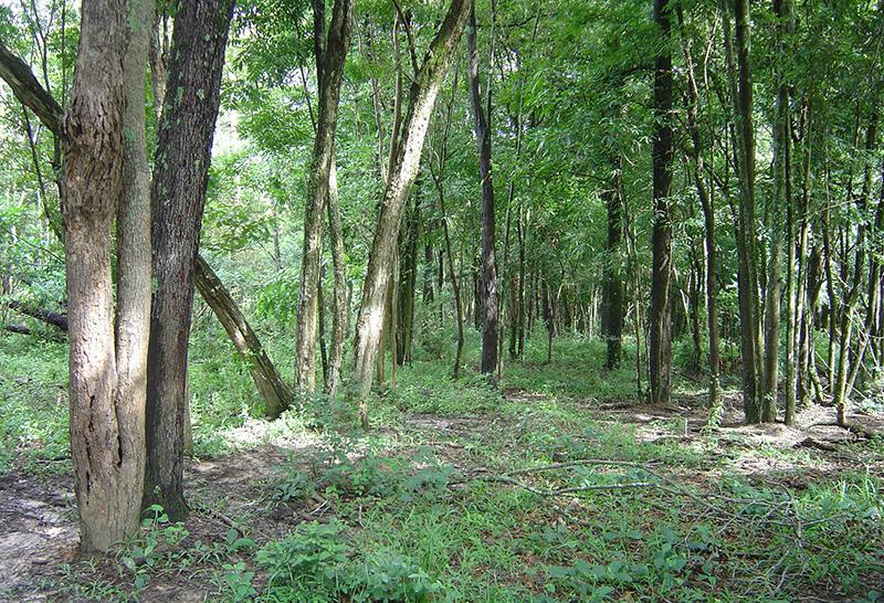 Com base em dados de 1.819 inventários florestais, pesquisadores da USP estimam as perdas de biodiversidade e biomassa no bioma