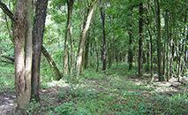 Com base em dados de 1.819 inventários florestais, pesquisadores da USP estimam as perdas de biodiversidade e biomassa no bioma (Renato de Lima/USP)