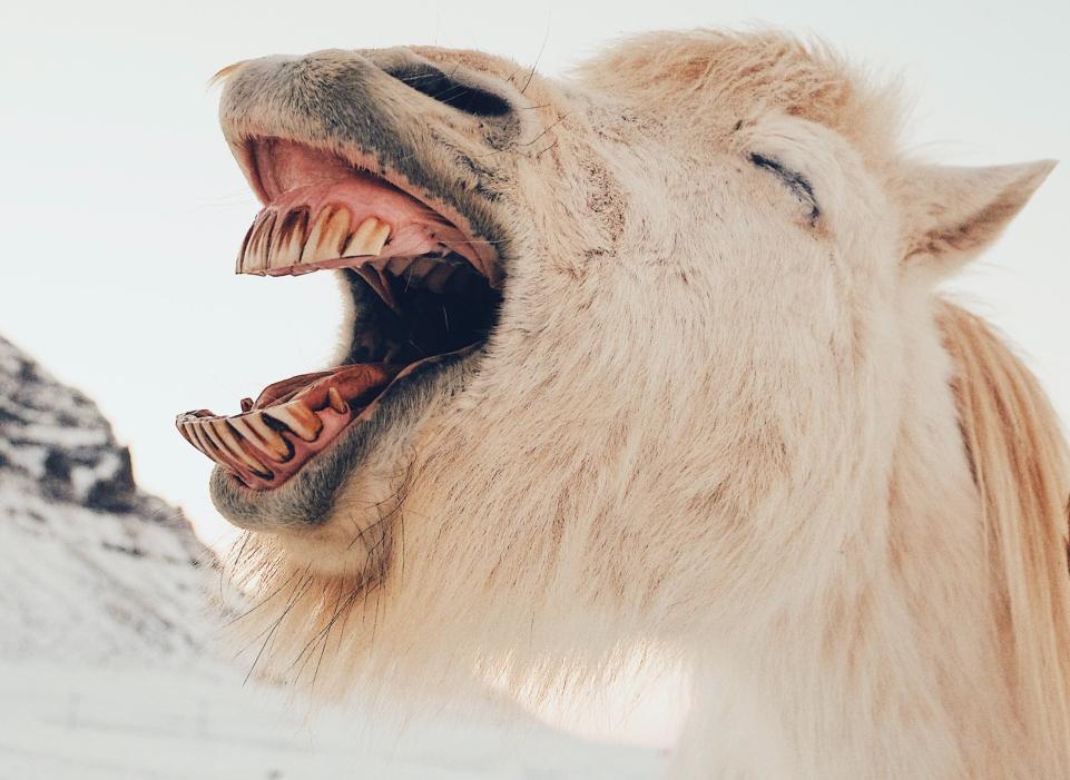 A principal vantagem do humor é ser absolutamente democrático: cada um ri quando, como e tanto do que quiser
